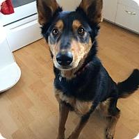 Adopt A Pet :: Malbec - Saskatoon, SK