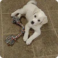 Adopt A Pet :: New Puppy - Tuscola, TX