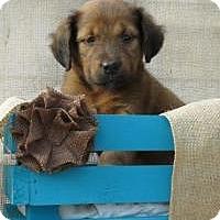 Adopt A Pet :: Dana - Joliet, IL