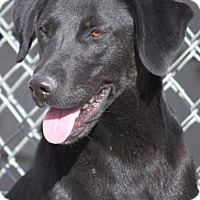 Adopt A Pet :: Rickie Willis - Hudson, NH