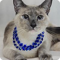 Adopt A Pet :: Rita - Dublin, CA