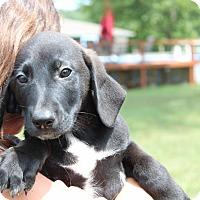Adopt A Pet :: Salami - Harmony, Glocester, RI