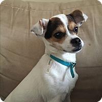 Adopt A Pet :: Theena - Plainfield, IL