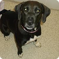 Adopt A Pet :: MAGGIE - Gloucester, VA