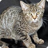 Adopt A Pet :: Safari - Newland, NC