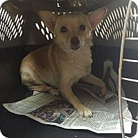 Adopt A Pet :: Ronny ($200 adoption fee) - Plainfield, CT