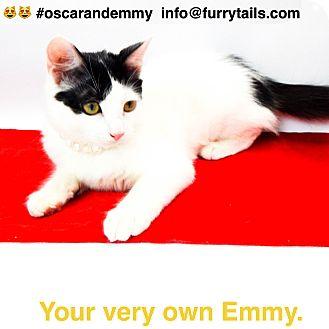 Domestic Mediumhair Cat for adoption in Studio City, California - Emmy & Oscar