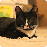 Adopt A Pet :: Doc - Carlisle, PA