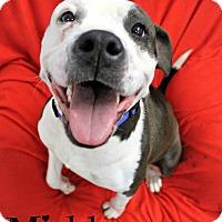 Adopt A Pet :: Mishka - Melbourne, KY