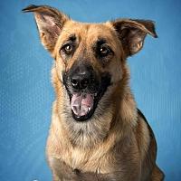 Adopt A Pet :: Zena - Montgomery, AL