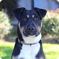 Adopt A Pet :: Dudley - San Diego, CA