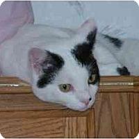 Adopt A Pet :: Patches - Sheboygan, WI