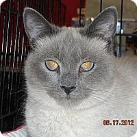 Adopt A Pet :: Sushi - Riverside, RI