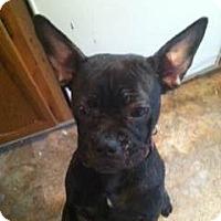 Adopt A Pet :: Charlotte - Cumberland, MD