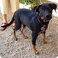 Adopt A Pet :: Myla - Adopting Pending - Phoenix, AZ