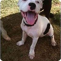 Adopt A Pet :: Darby - Arlington, TX