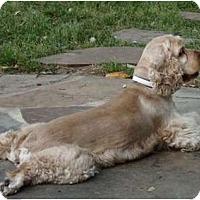Adopt A Pet :: Leo - Sugarland, TX