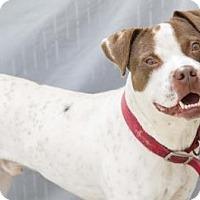 Adopt A Pet :: Frank  Euth Nov 23 Hurry!! - Lincolnton, NC