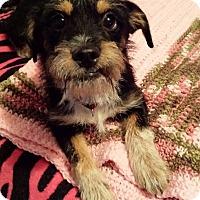 Adopt A Pet :: Buster - Buchanan Dam, TX