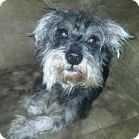 Adopt A Pet :: Porkchop(12 lb) A Character! - Sussex, NJ