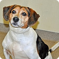 Adopt A Pet :: Barney - Port Washington, NY