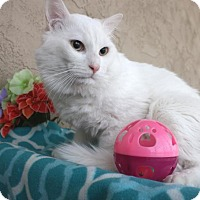 Adopt A Pet :: Powder - Phoenix, AZ