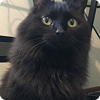 Adopt A Pet :: Bitsy - St. Paul, MN