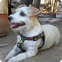 Adopt A Pet :: Jonah-Likes cats! - West Los Angeles, CA