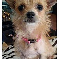 Adopt A Pet :: Audree - Plant City, FL