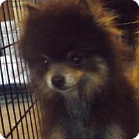 Adopt A Pet :: mouse - Zaleski, OH