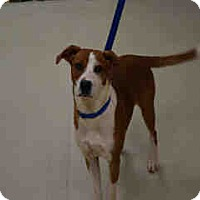 Pointer Mix Dog for adoption in Newnan City, Georgia - Barney