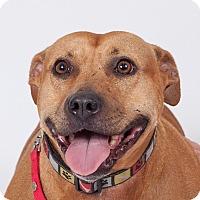 Adopt A Pet :: Maggie - Jupiter, FL