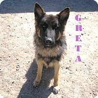 Adopt A Pet :: Referral - Greta - Denver, CO