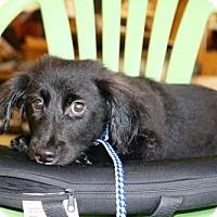 Adopt A Pet :: SPENCER - Willows, CA