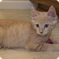 Adopt A Pet :: Rio - Savannah, GA