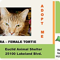 Adopt A Pet :: Zara - Euclid, OH