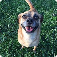 Adopt A Pet :: Mocha - Xenia, OH