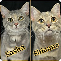 Adopt A Pet :: Sasha 160693 - Atlanta, GA