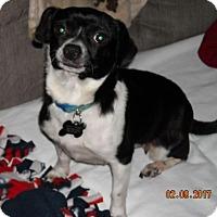 Adopt A Pet :: Martha - Flossmoor, IL