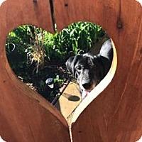 Adopt A Pet :: Jake - San Francisco, CA