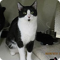 Adopt A Pet :: Guiseppe - West Dundee, IL