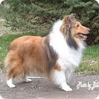 Adopt A Pet :: Cindy - Alderson, WV