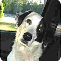 Adopt A Pet :: Kelly - Kingwood, TX