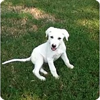 Adopt A Pet :: Thor - Adamsville, TN