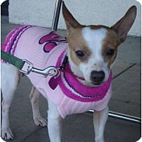 Adopt A Pet :: Lucy - Lake Forest, CA