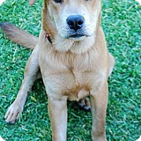 Adopt A Pet :: HUCK (Huckleberry) - Torrance, CA