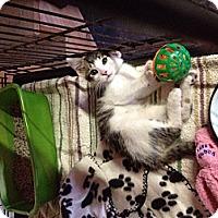 Adopt A Pet :: Curtis - Byron Center, MI