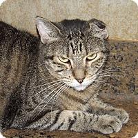 Adopt A Pet :: Tabitha - Mesa, AZ