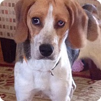 Adopt A Pet :: Bonnie - Wappingers, NY