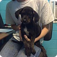 Adopt A Pet :: Finnegan - Charlestown, RI